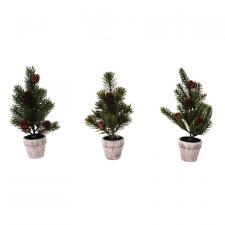 3 Asst Pine Tree w/Wooden Pot
